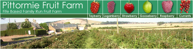 Pittormie Fruit Farm